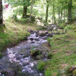 Festi peche 2013 le ruisseau de Dusas